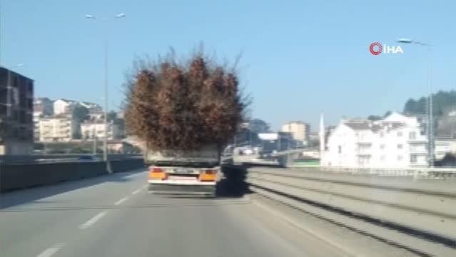 Seyyar ormanı andıran kamyon görenleri şaşırttı